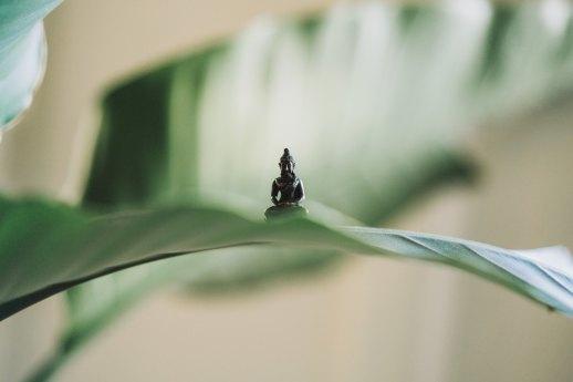 buddhaonaleaf